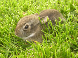 Rabbit2 by coldshadows