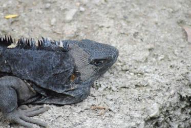 iguana by rojomaster55