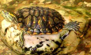 Ninja turtle by GODDAMNGODDAMN