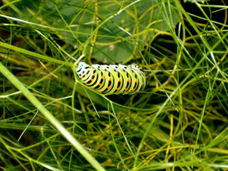 caterpillar by GODDAMNGODDAMN