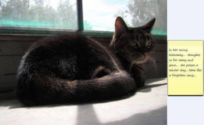 Sun Cat... by cattservant