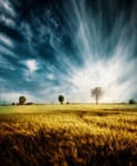 Yellow field by pkritiotis