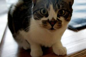 My Kitty by NewInsanity