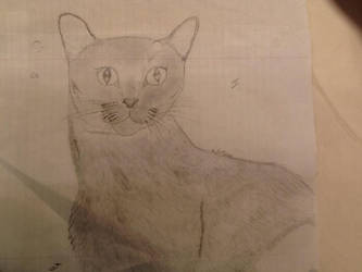 Feeling Catty by KayJewels