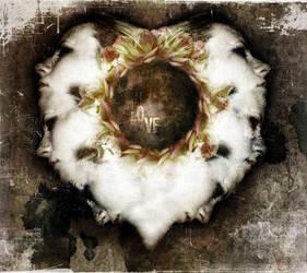 loverose by hyperfast