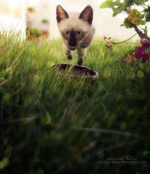 Super Cat X The Beetle by Josiane-Rey