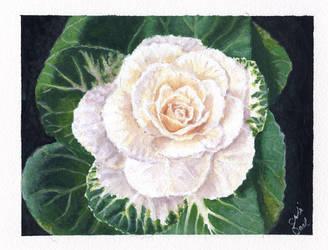 Flowering Cabbage by littlesapphire