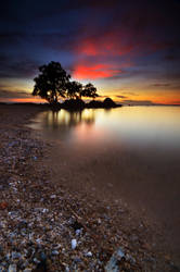 Tree At Sunset Vertical by comsic