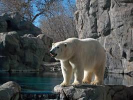 Polar Bear by Requieum