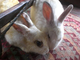 Sweet Rabbits by balacicek