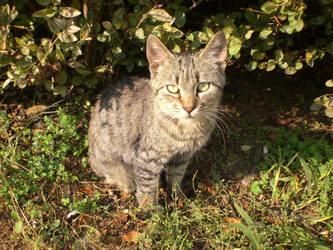 Cute Cat by balacicek