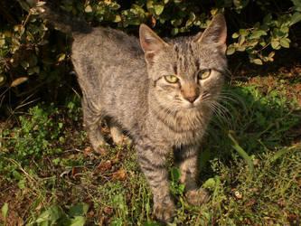 Cute Cat 2 by balacicek