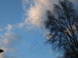 Birds are beautiful creatures by balacicek
