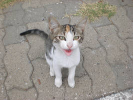 Spoiled Cat by balacicek