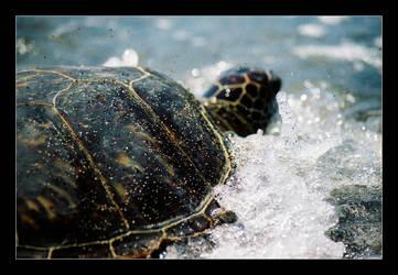 Turtle Adventure by QuoiQueCeSoit
