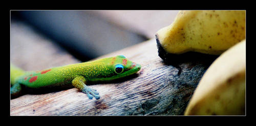 Gecko and Banana by QuoiQueCeSoit