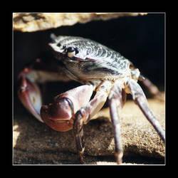 Feelin' Crabby by QuoiQueCeSoit