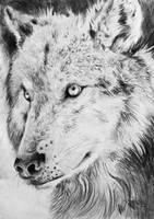 Wolf by FuzzyMaro