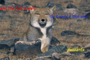 Arabianwolflove's Profile Picture