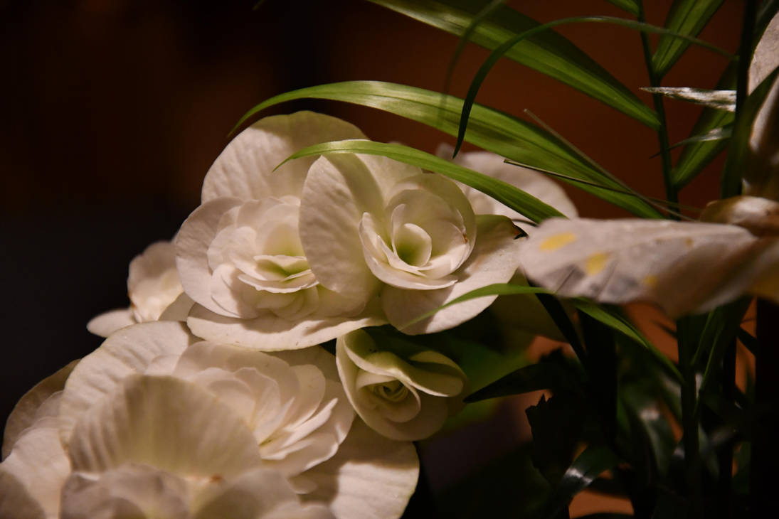 Flowers by lumination