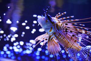 The Aquarium by Fawwna