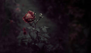 The Gardener by royal-nightmare