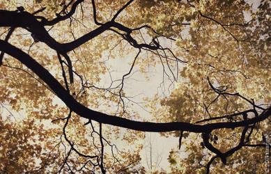 faded sky II by jibrail
