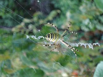 my sweet spider by LastDropOfBlood