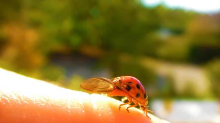 Ladybug by Yughues