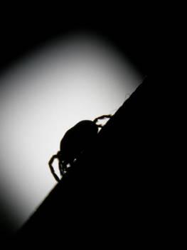 Dark Bug by Yughues