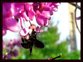 Strange Bumblebee by Yughues