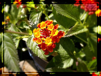 Warm Flowers by Yughues