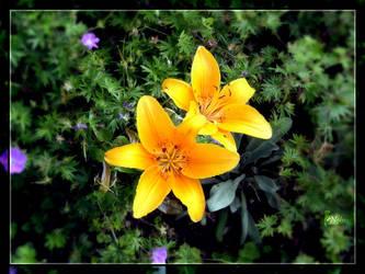 Sunny Flower by Yughues