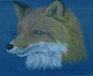 Fox by Giu-sama