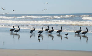 Nine Pelicans by MogieG123