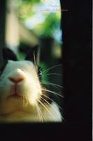 eevrham bethelias by rabbits-nine