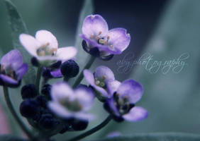 Purple by aby192