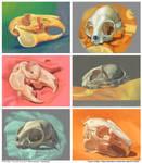 3DS Skulls by Twarda8