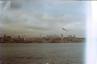 bird in sky 2 by aysegulyildiz