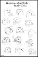 Snowy Owls of Ga'hoole by Spectra-Sky