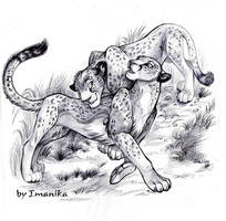 cheetahs by Light-Angel-Vera