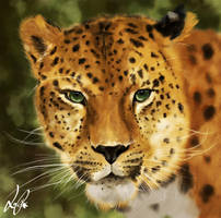 The Leopard by para-vine