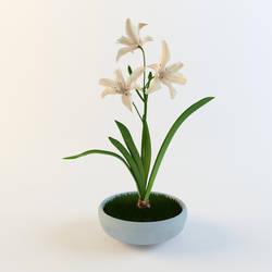 Lily by selebriana