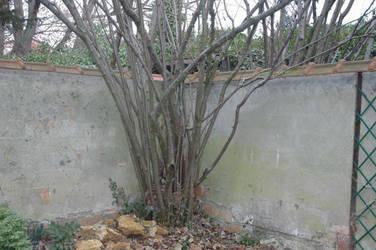 Jardin 1 by Koot-Von-Thuzad