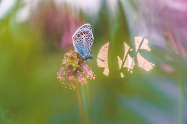 Butterfly morning view by Detailmagie