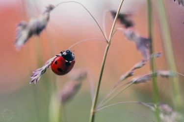 Little Ladybug by Detailmagie