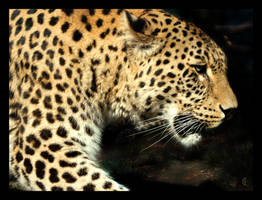 Wild beast by citrina