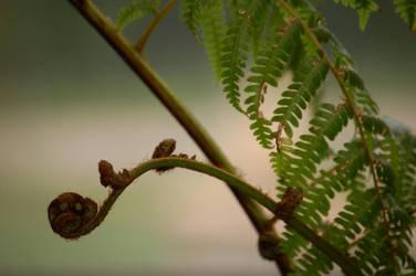 A twist of fern by citrina