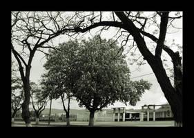 Tree Arch by citrina