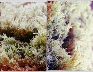 ryto sniegynai by visa-tai-ruduo